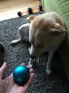 shamed dog