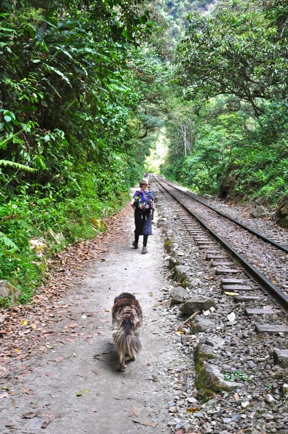 woman and dog walking railroad tracks