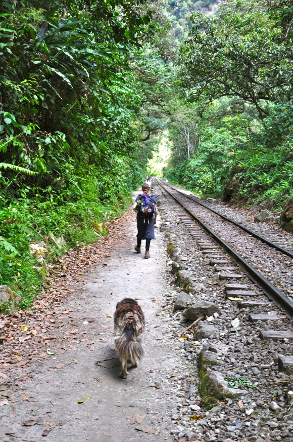 woman and dog walking railroad tracks